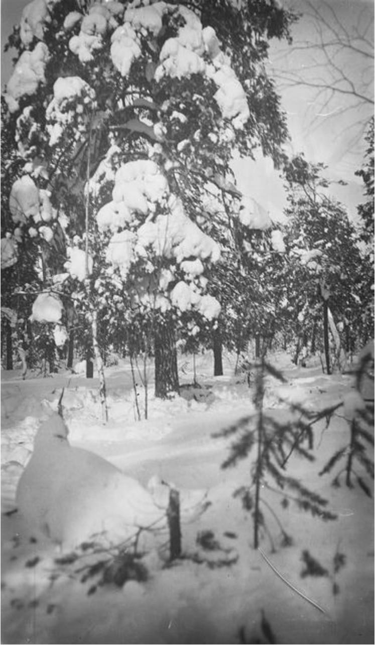 159. Зимний лес