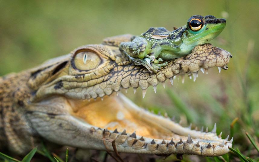 6. Водное такси. Чайка и поросенок на Багамах. (Фото JULIE ZONEY):