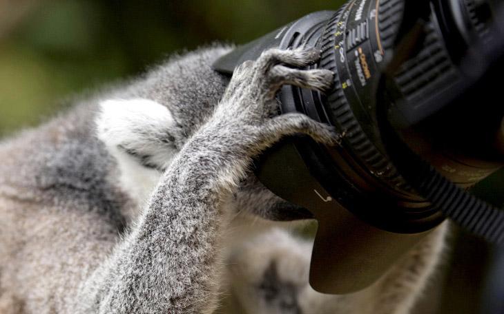 2. Искусный охотник. Хамелеон поймал кузнечика. На это у него ушло 0,003 секунды. (Фото Milan Zygmun