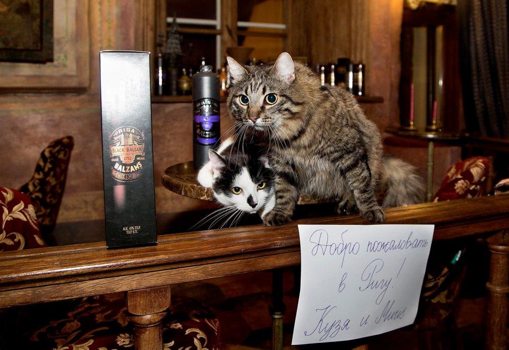«За прошедшие выходные коты успели сфотографироваться на столе у мэра, на рождественской ярмарк