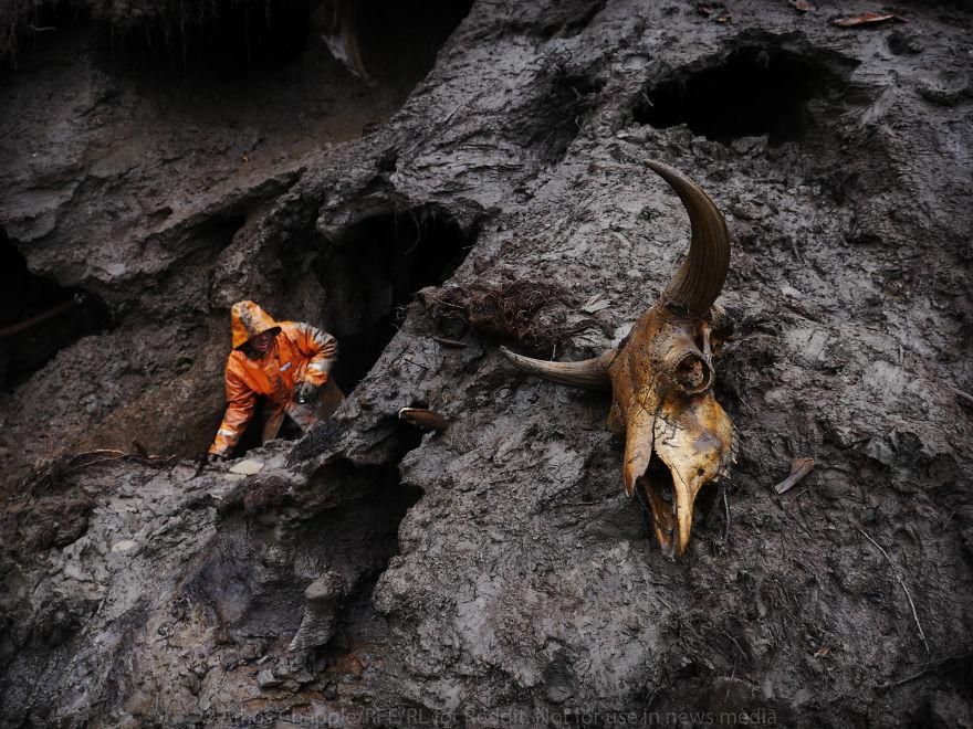 Здесь можно найти не только останки мамонтов. Это череп бизона, который когда-то жил на сибирских ра
