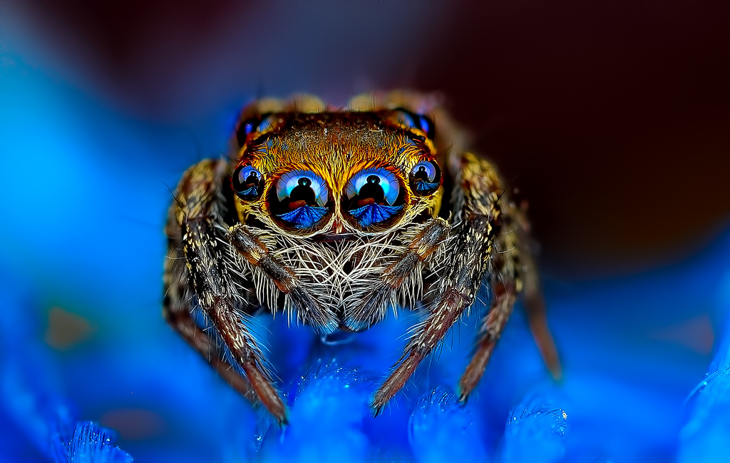 Eye of the Spider: Hypnotizing Macro Photos of Exotic Spiders Staring Directly into Your Mind (11 pics)