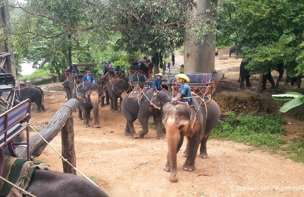 катание на слонах тайланд