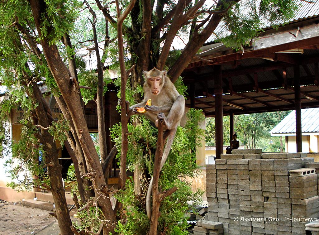 обезьяна в таиланде на дереве