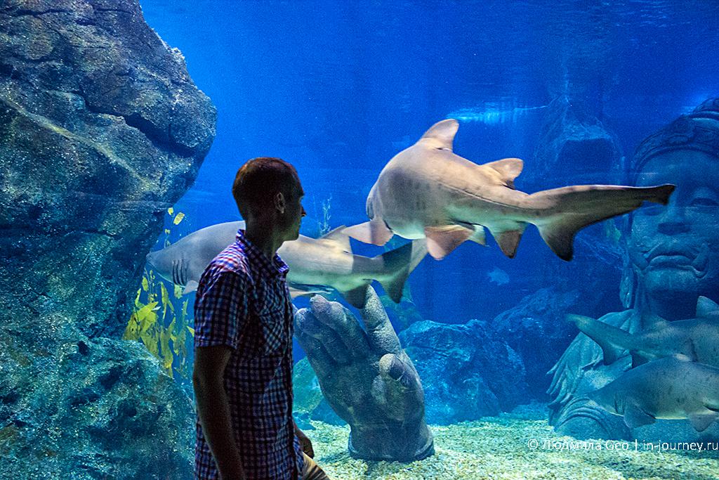 акулы в океанариуме в сиам парагон