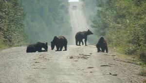 Туша медведя с отрезанными лапами лежала прямо на автотрассе Камчатки