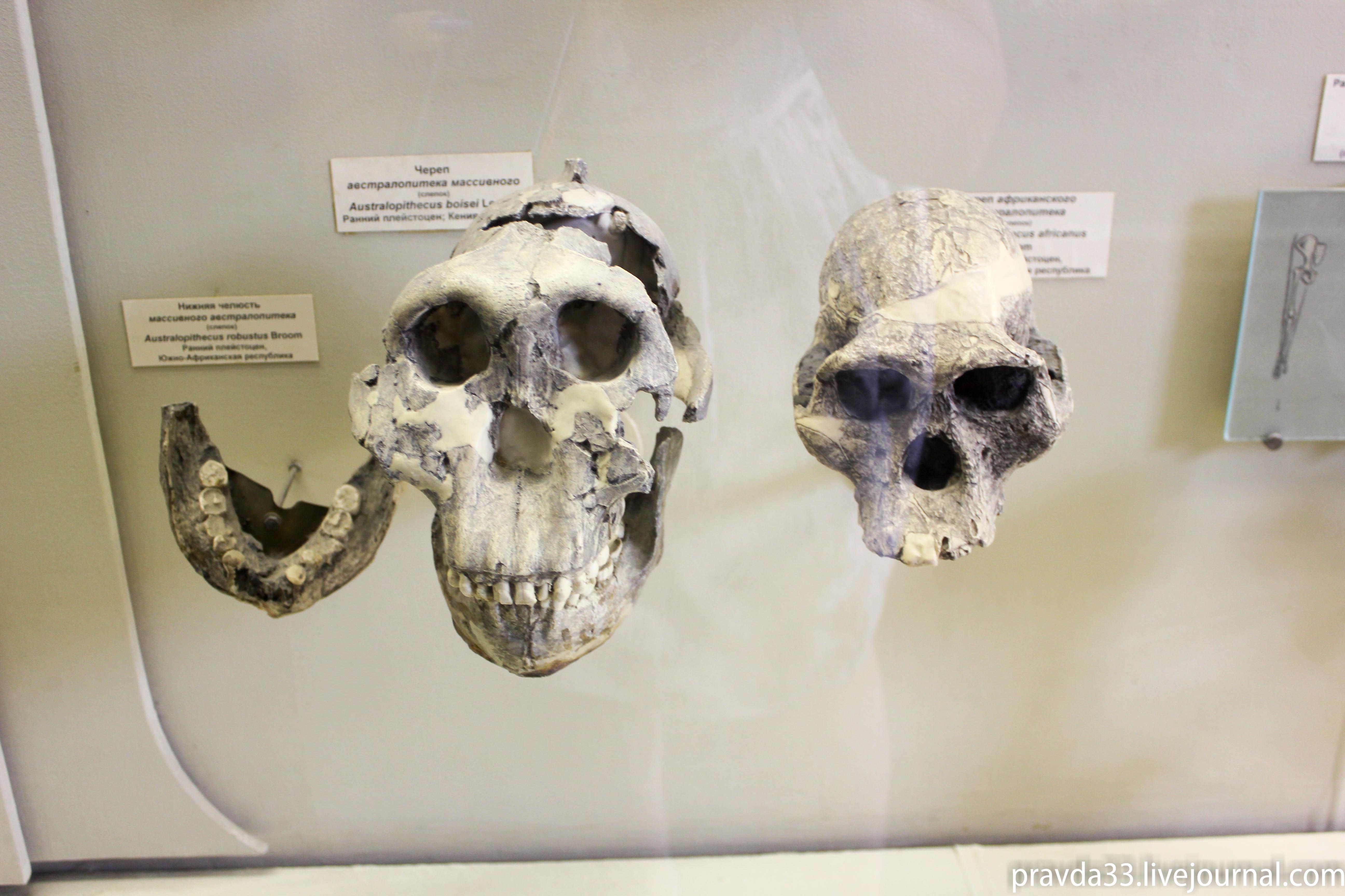 Музей палеонтологии-83.jpg