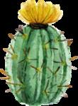 кактус (1).png