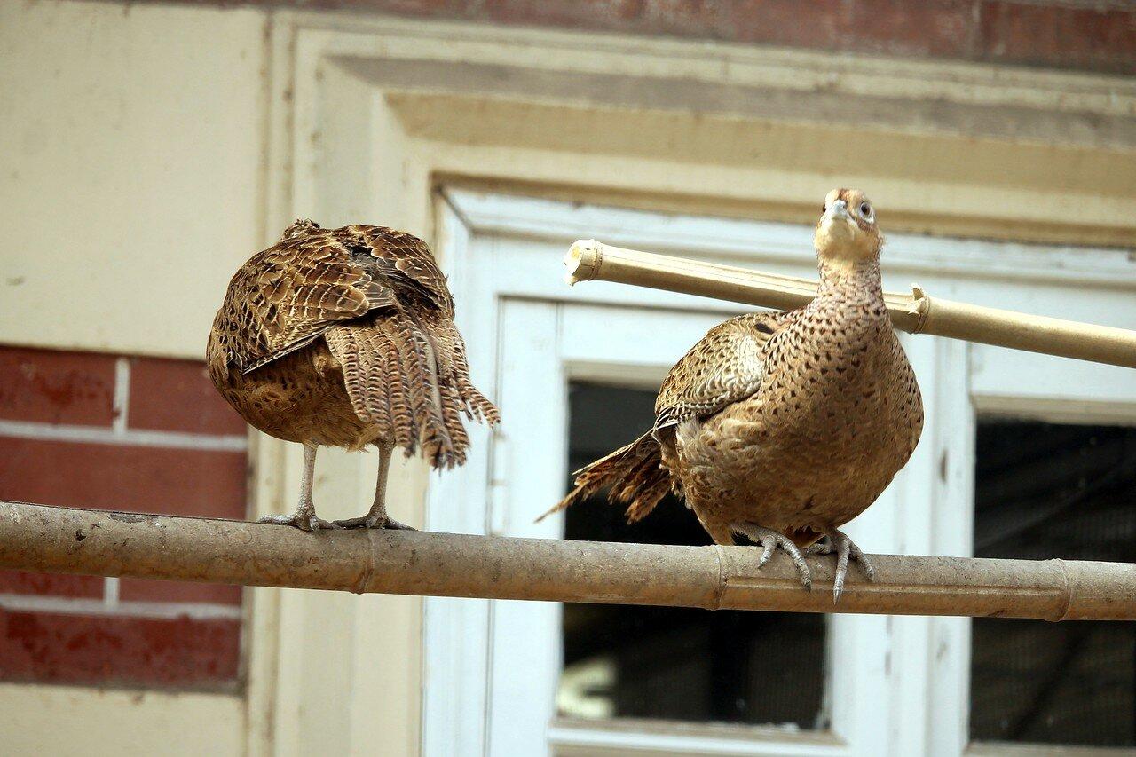 Стамбул. Птичник дворца Долмабахче