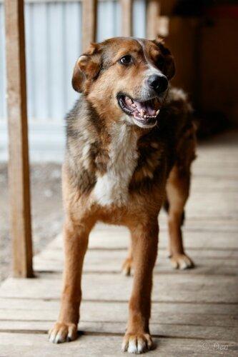 Кайзер собака из приюта догпорта