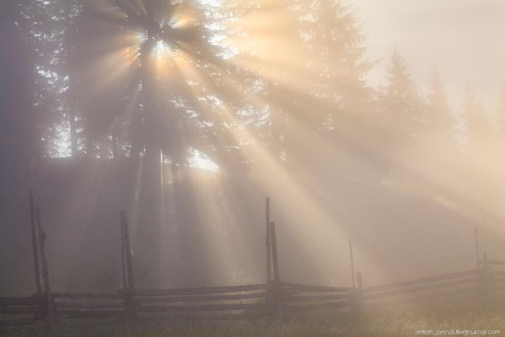 16. И последнее фото того утра — дерево, которое я снимаю каждый выезд в Карпатах )  Также с