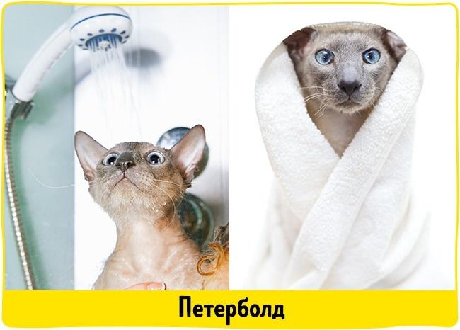 © depositphotos  Породы лысых кошек совсем неимеют шерсти инесоздадут проблем, связанных с