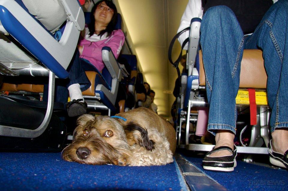 Пес-путешественник в Азии: