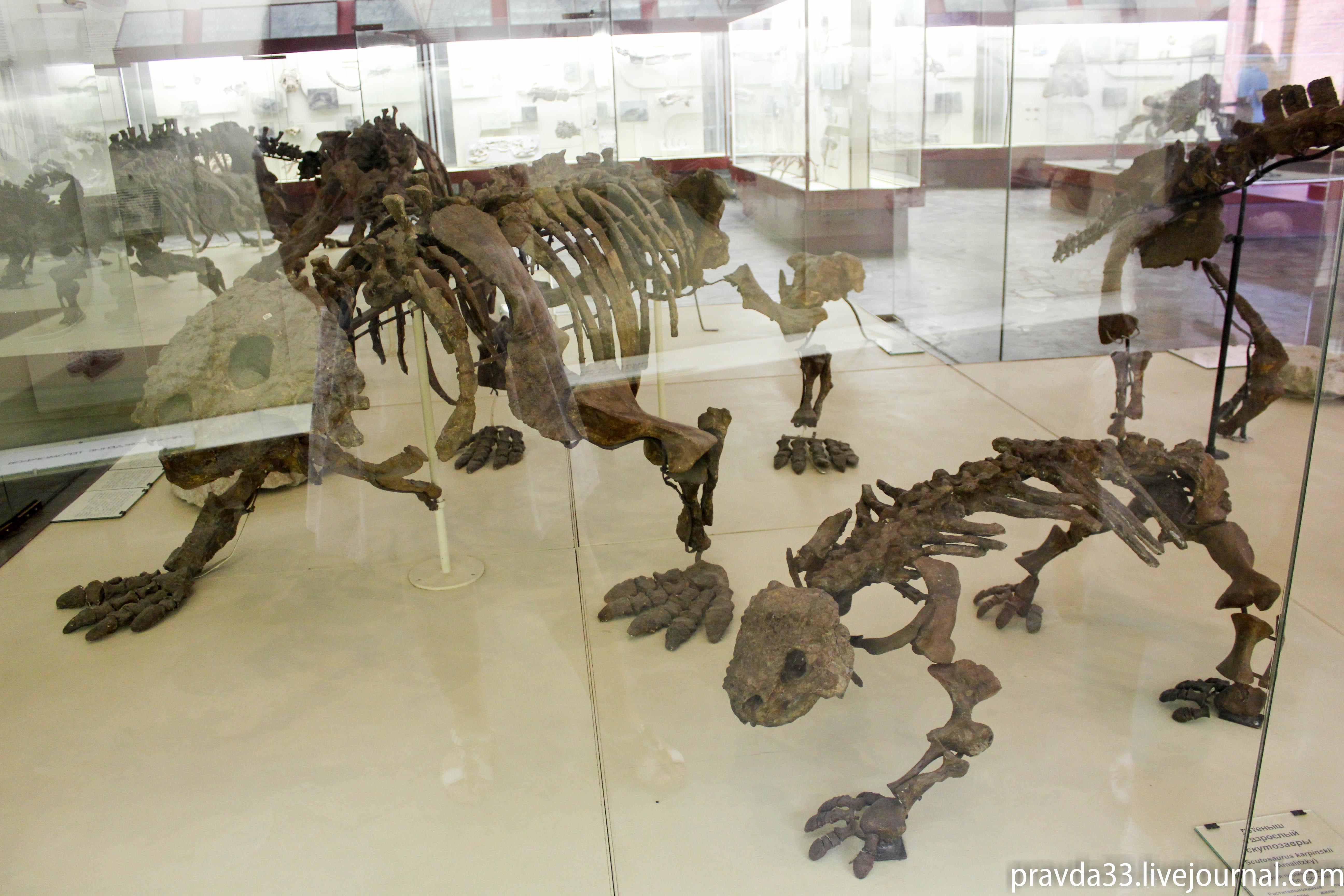 Музей палеонтологии-32.jpg