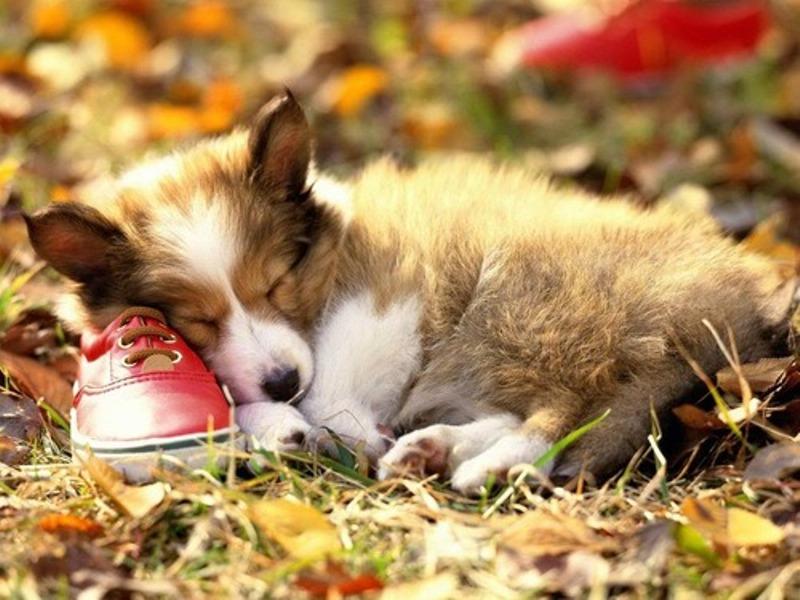 осень-животные-собакин.jpg