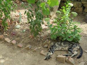 Обитатели Керчи - котики