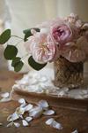 Розы ч.6
