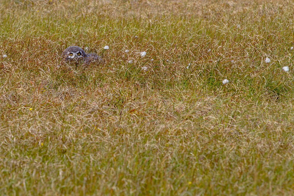 20. Родители птенца держатся рядом. Их белая окраска далеко выдаёт птицу. В обозреваемом просто