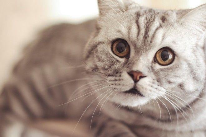 10. Кот может спасти тебе жизнь. Известно множество случаев, когда коты обнаруживали пожар или утечк