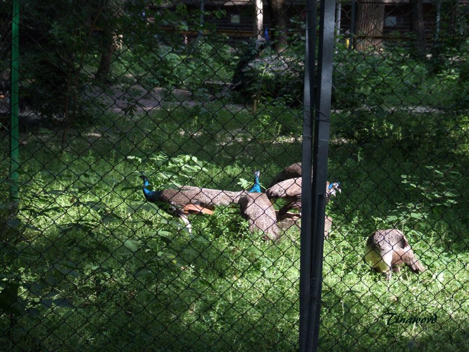 зоопарк-21.jpg