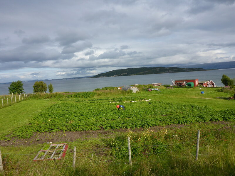 огород с картошкой на севере норвегии