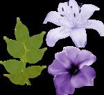 цветочки (4).png