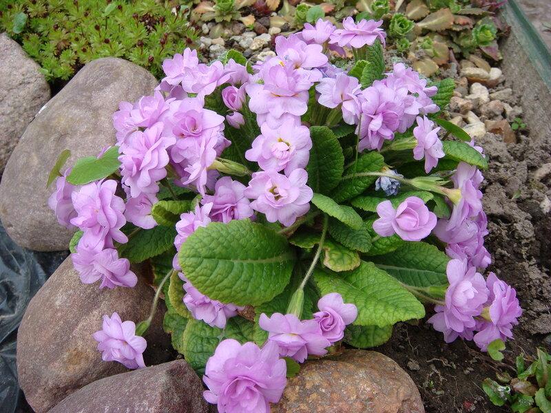 Цветочно декоративные растения