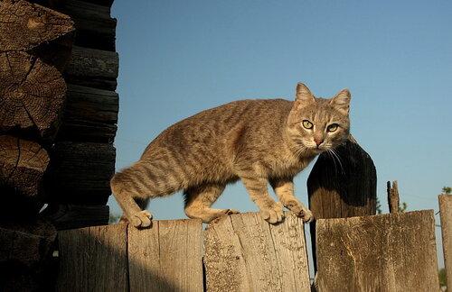 besvasbic — «Кот заборный» на Яндекс.Фотках