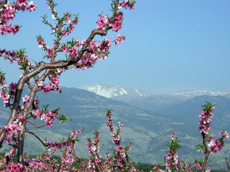 Будь счастлива по-весеннему и нежно любима.  С теплом моей души и весной южной, Надя.