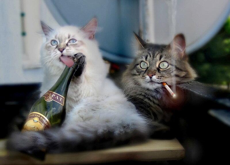 Настойка от алкогольной зависимости из корней любистока