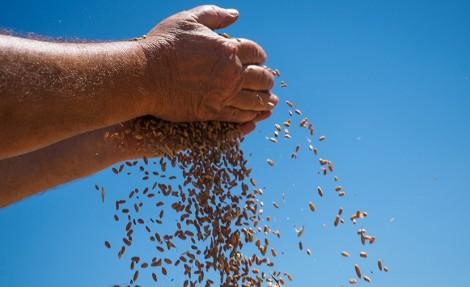 Владимир Путин: в этом году в РФ ожидают рекордный за всю историю урожай зерна
