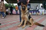Выставка собак 2017 в Днепропетровске (7).JPG