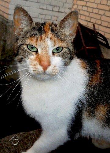 Портрет серьёзной кошки