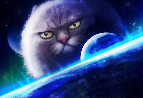 Открытки с Всемирным днём НЛО. Кот, следящий за космосом!