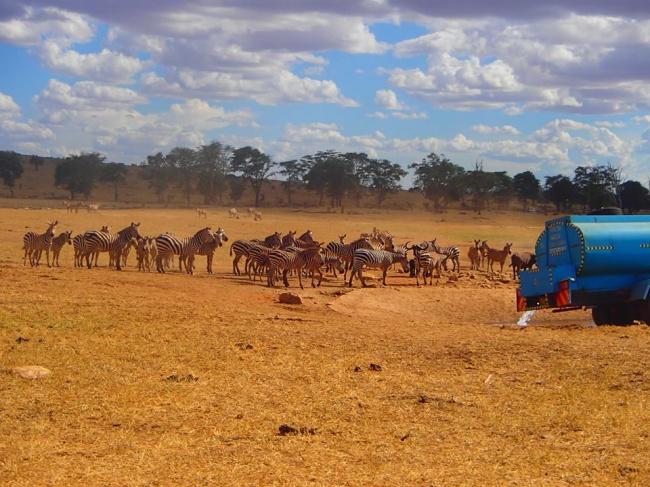 © Patrick Kilonzo Mwalua  Слоны, буйволы, антилопы изебры бегут совсех окрестностей науже з