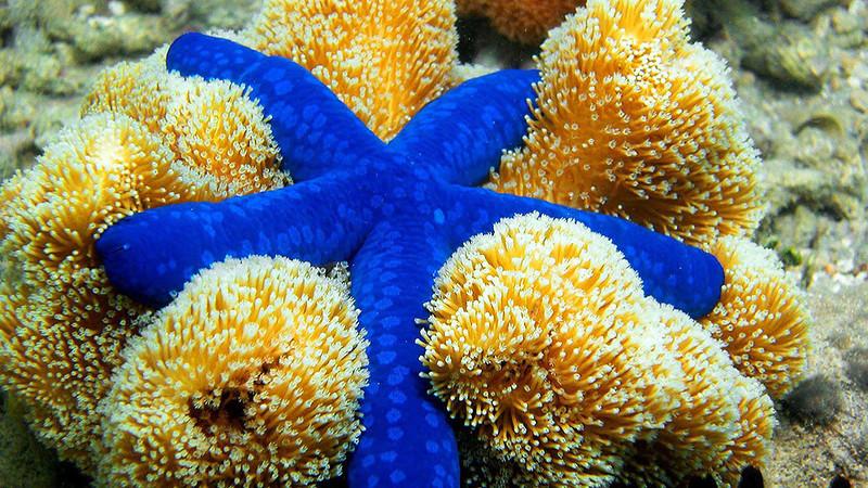 Самые яркие обитатели океана