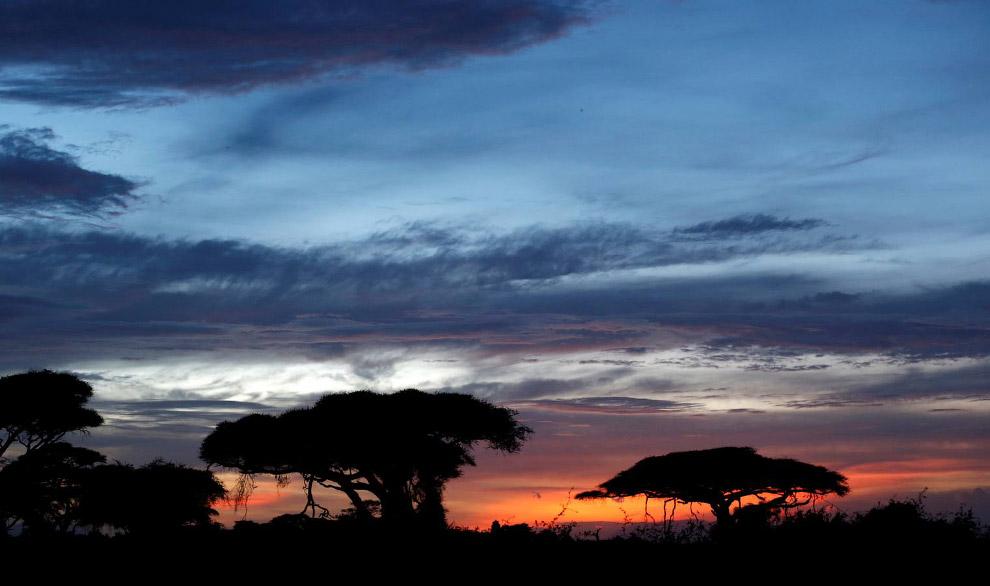 11. Потерял бивень в бою. Кстати, самый крупный из известных бивней африканского слона достигал
