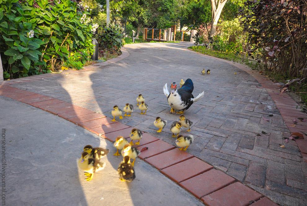 5. У отеля четыре сообщающихся бассейна, которые составляют вместе самый большой по площади гос