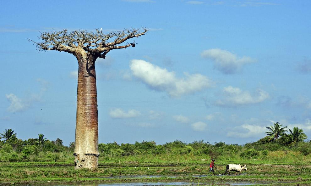 24. Голова Будды переплелась с корнями дерева в руинах древнего города Аюттхая, Таиланд. (Фото