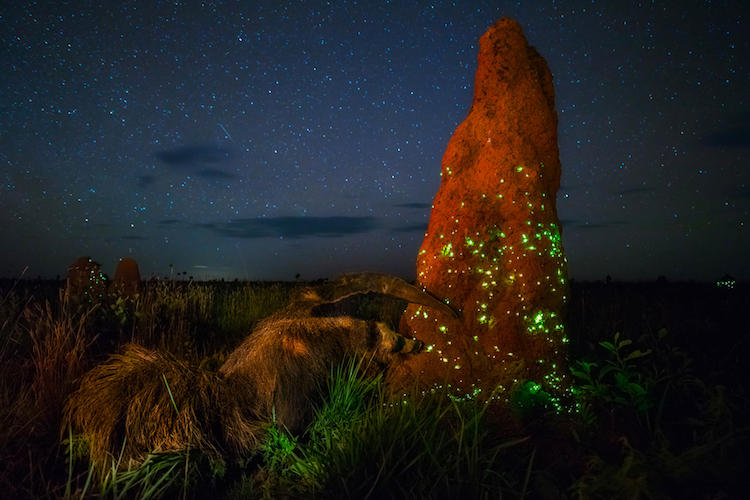 Победитель в категории «Пейзажи, морские пейзажи и флора». Национальный парк Гавайские вулканы на Га