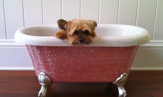 © The Diamond Bathtub  Если выочень любите своего домашнего питомца иувас есть лишние $39