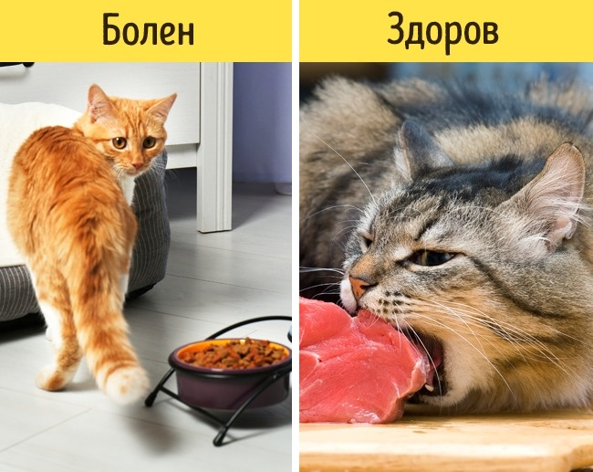 12признаков того, что питомца надо срочно показать ветеринару (12 фото)