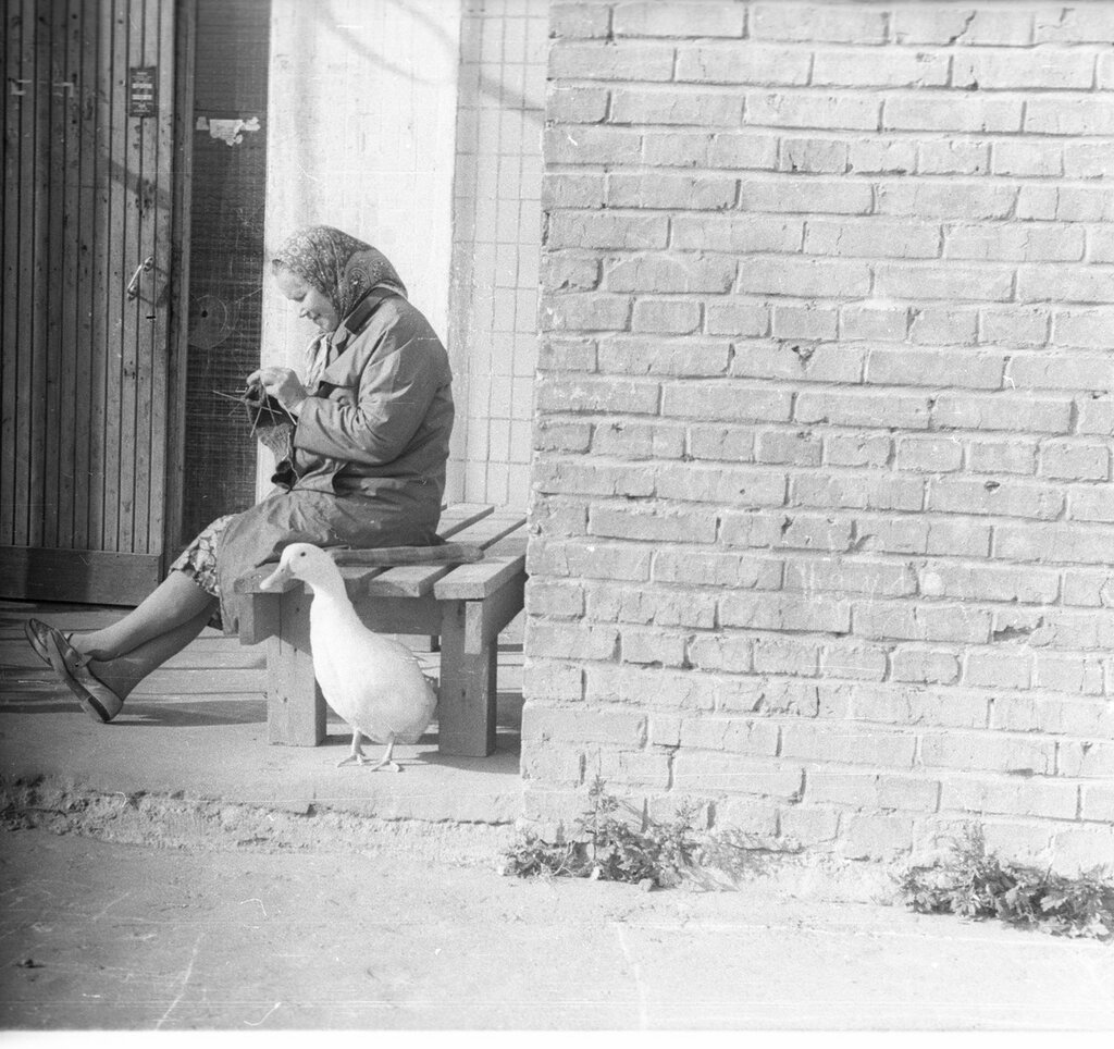 601184 Гусь (по мнению некоторых Утка) у 4 подъезда дома 9 на Красноярской улице.jpg
