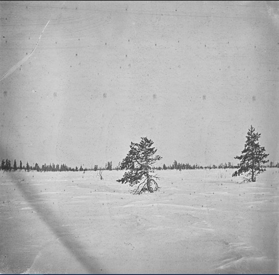 79. Пейзаж арктической тундры