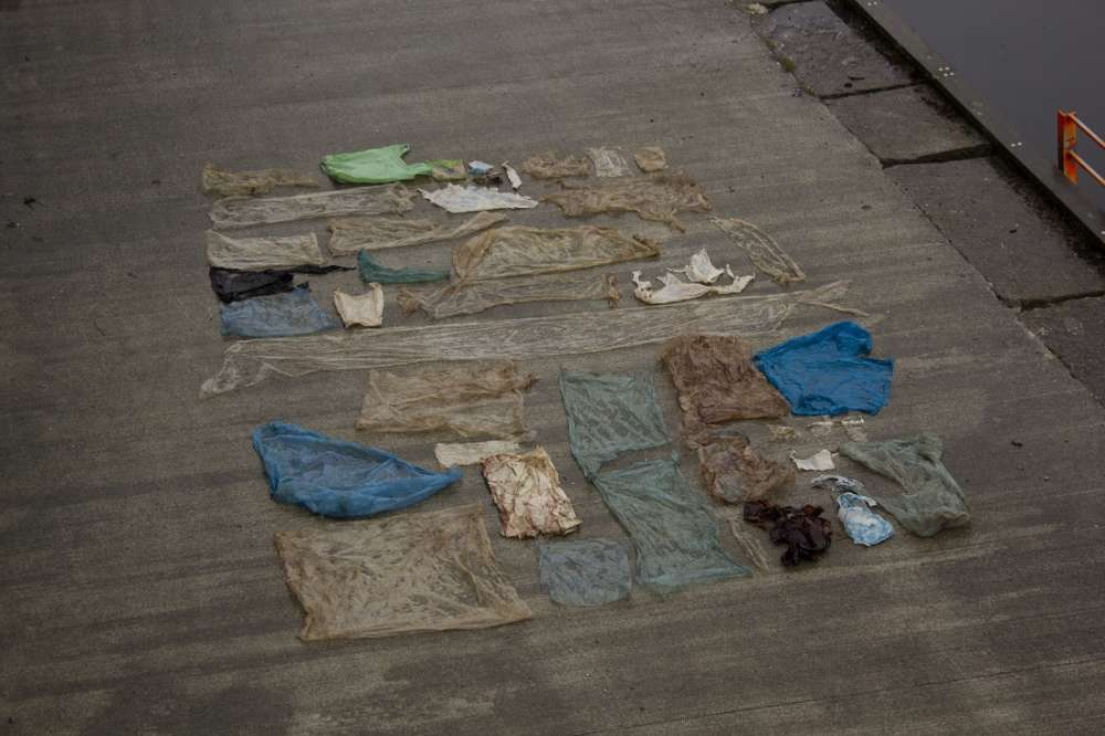 Склад пластиковых пакетов внутри мертвого кита