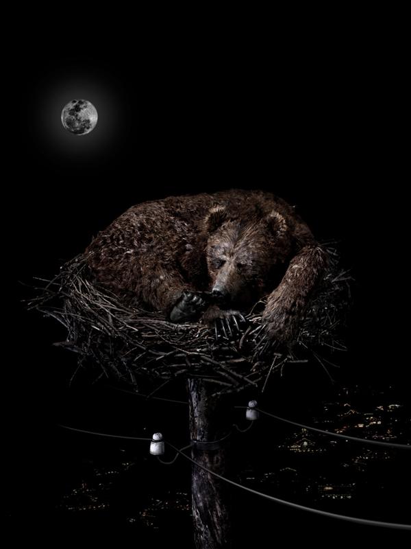 Медведь, который строит гнезда на деревьях