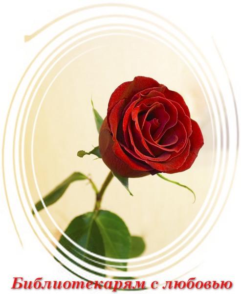 27 мая С днем библиотек! С праздником вас! Библиотекарям с любовью! Роза