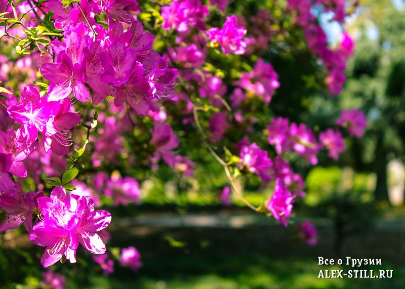 Весна в ботаническом саду Батуми
