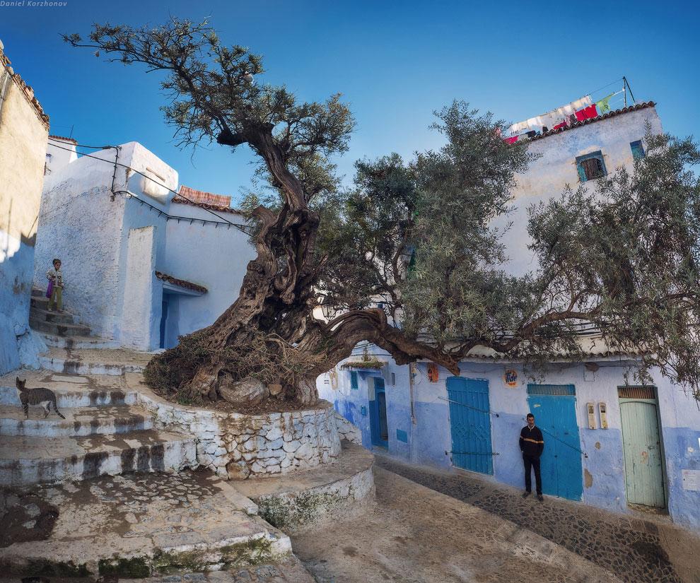 Шефшауэн — удивительный цветной город-облако Марокко, знаменит он тем, что его стены окрашены н