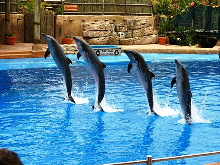 22. Мальтийский дельфинарий. Дельфинарий находится рядом с морем и прекрасно сочетает в себе развлек